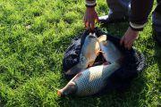 Рыбалка на Балатоне: что нужно знать?